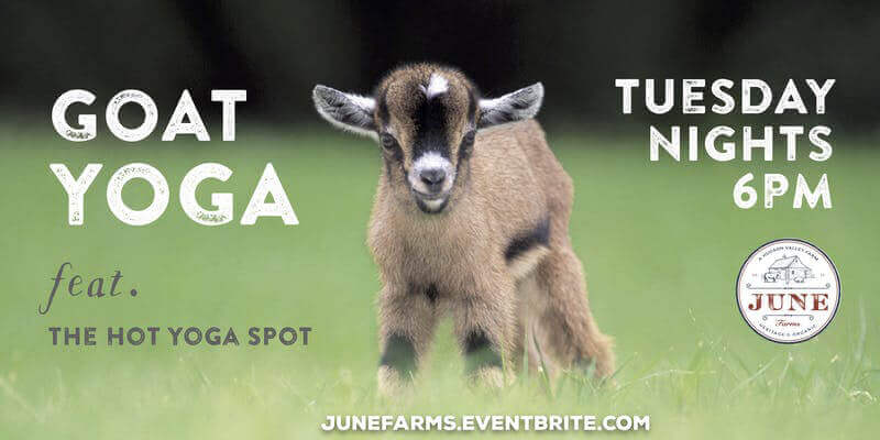 Goat Yoga Tuesday Nights at 6pm